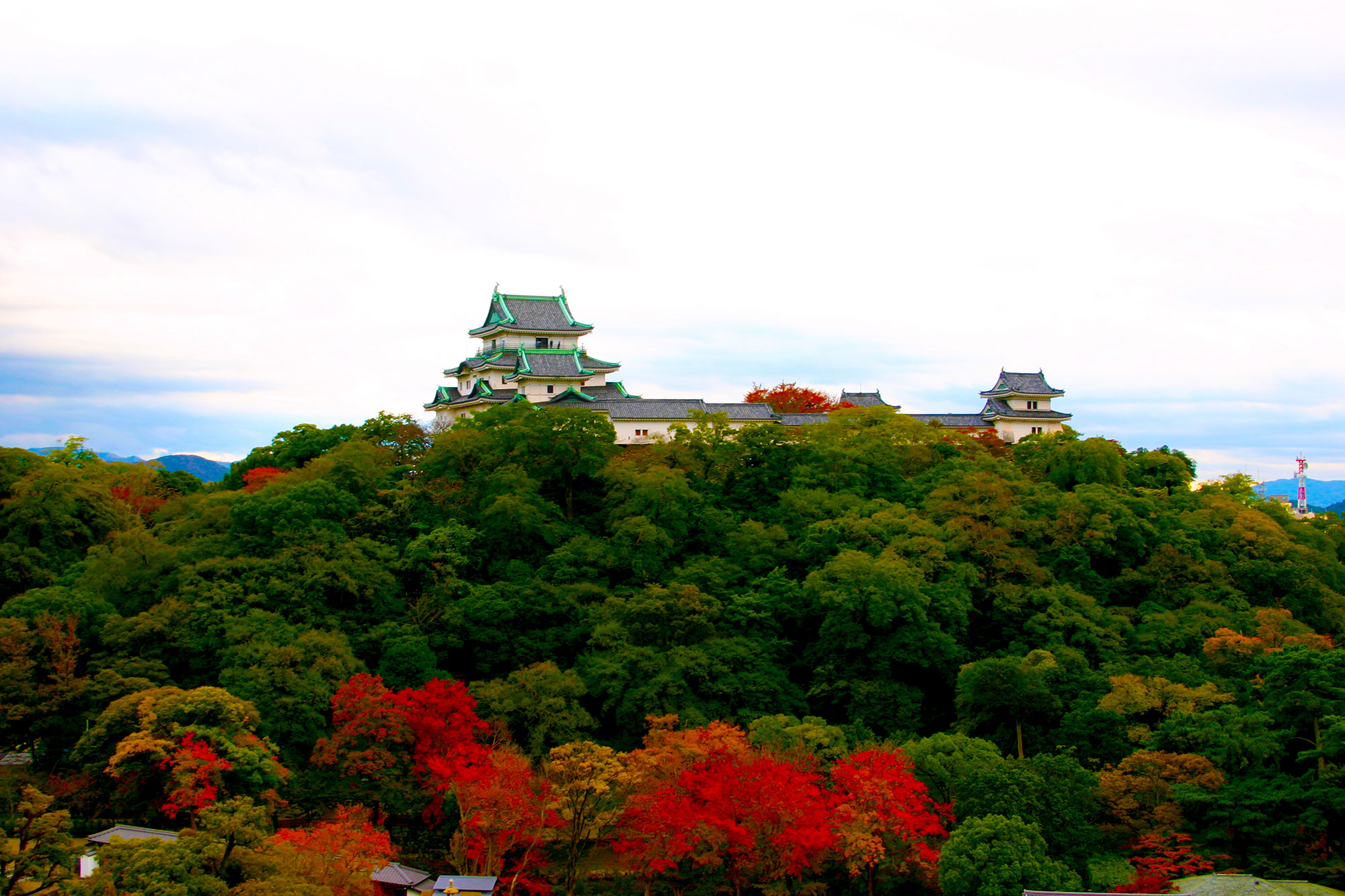 Maple stained red and Wakayama castleの写真