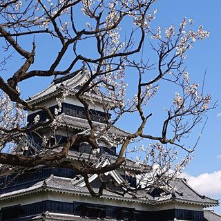 photo of sugimoto_castle